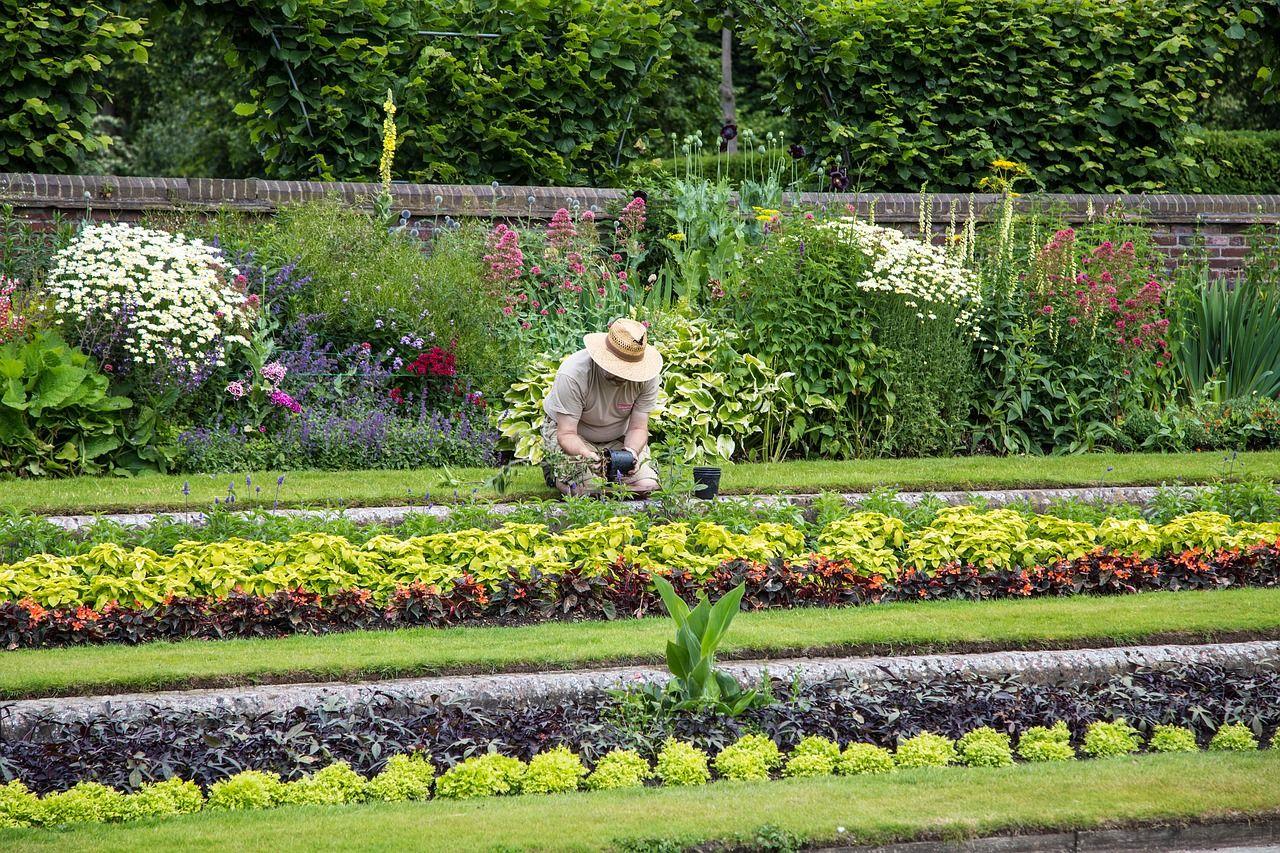 Pierwsze kroki w zakładaniu i uprawie własnego ogródka