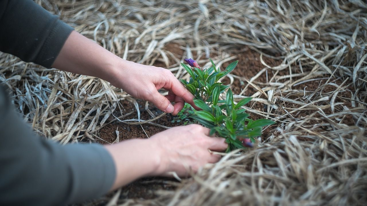 Jak przygotować podłoże do posadzenia roślin?