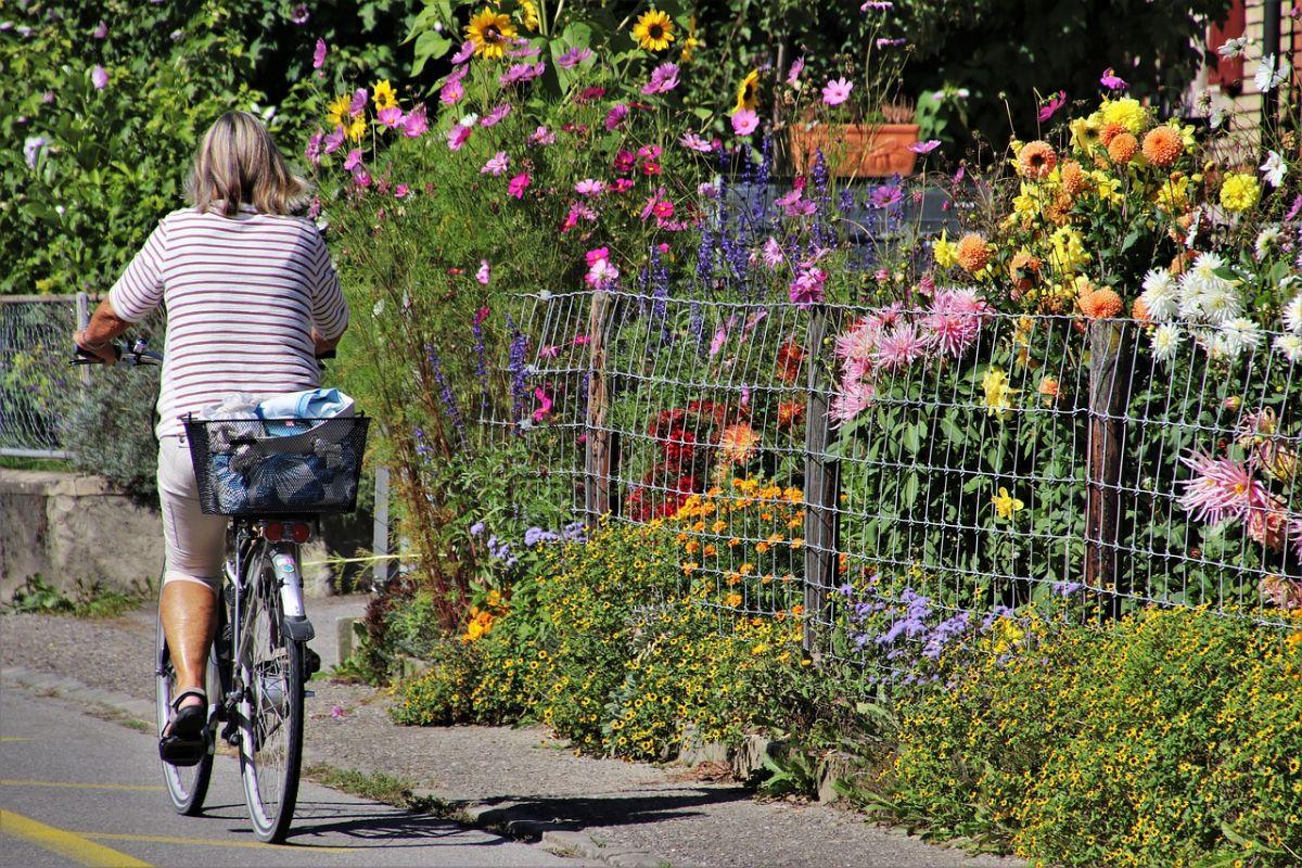 Jak ogrodzić swój własny ogród, zachowując jednocześnie jego estetyczny wygląd?